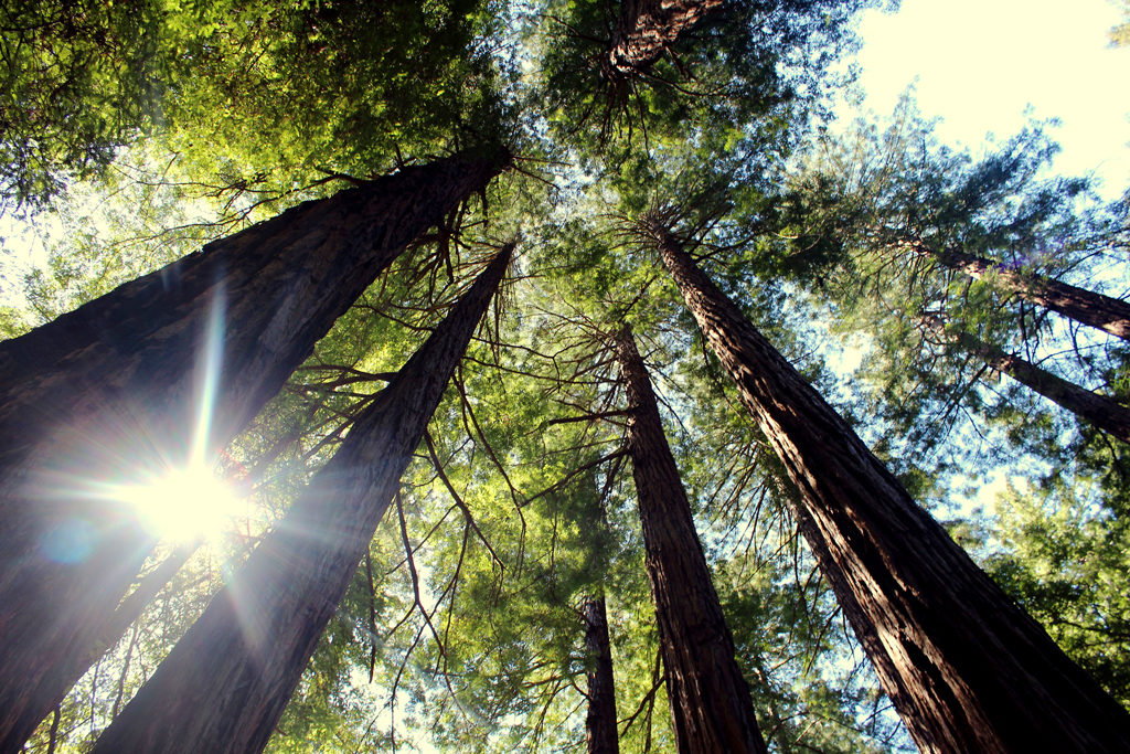 photo 1024x683 - Introduction to Wood Species: Mahogany